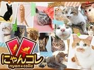 デジタライズ、実写ネコカードゲーム『にゃんコレ』をSP版GREEでリリース…収益の一部をネコを保護するNPOに寄付