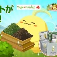 NHN Japan、『ハッピーベジフル』で「おためし茶箱」プレゼントキャンペーン実施
