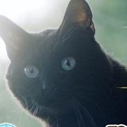 コロプラの『クイズRPG 魔法使いと黒猫のウィズ』が500万DL達成 10日間で100万DL上乗せ テレビCM効果で急増