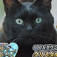 コロプラの『クイズRPG 魔法使いと黒猫のウィズ』が累計600万DL突破! 500万DLからわずか8日で【追記あり】