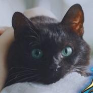 コロプラ、『クイズRPG 魔法使いと黒猫のウィズ』のTVCMを本日より放映開