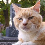 ディスカバリー・ジャパン、「アニマルプラネット」で猫の番組に注力する特集「2月は、にゃんと!猫の月」を2月1日より1ヵ月間展開!