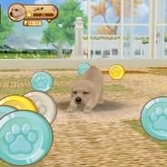 ガマニア、わんこ育成シミュレーション『てのひらワンコ』でゲーム内で手に入るコインや経験値を大幅に増加したアップデートを実施