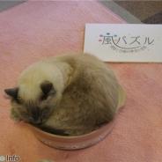 【イベント】トムス、「風パズル パーティ in 猫カフェ きゃりこ」を開催
