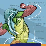ボーンデジタル、『アナトミーとフォース 構造と機能から描く躍動感ある人体』を8月初旬に発売