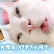 360Channel、残念な寝顔にも程があるイケメン猫「セツくん」のVR動画を一挙公開