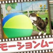 エイジ、『てのひらニャンコ』のゲームの内容がひと目で分かるPVを公開! 大人気にゃんこ「まる」のゲーム内の動画も公開