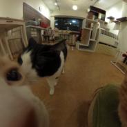 恵比寿の猫カフェ「ニャフェ・メランジェ」で、360度カメラ「RICOH THETA SC」の無料貸出中…ネコとの触れ合いをまるっと持ち帰り