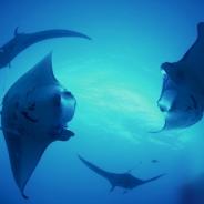 水中遊泳や沈船ダイビングをVRで体験 VIRTUAL GATEで自然・旅行系VRコンテンツが5タイトル配信開始