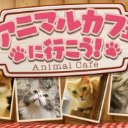360Channel、新チャンネル『アニマルカフェに行こう!』を追加 第1弾は猫カフェを特集…VRでネコと戯れよう