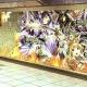 サムザップ、約15mの『戦国炎舞』巨大ポスターを新宿駅「メトロプロムナード」に掲載! 貼付のリアルカードで豪華キャンペーンに参加可能