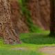 ポケモン、WEBコンテンツ「Pokemon Wild Area Search」を11月上旬に公開予定 ガラル地方の「ワイルドエリア」をジオラマで再現!