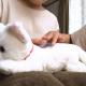 セガトイズ、ペットのお産を応援する玩具「ねこ、産んじゃった」を10月31日に発売! 猫だけでなく犬、うさぎも同時発売