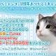 エイジ、にゃんこ育成シミュレーションアプリ『てのひらニャンコ』サービス開始1周年記念としてギフトコード1500円分が当たるキャンペーンを実施