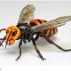 バンダイ、『いきもの大図鑑アドバンス スズメバチ』を「ガシャポンオンライン」で受注開始 全身26箇所が可動、造形や彩色も本物を再現