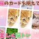 HEDGEHOG、可愛い猫のメモリーマッチパズル『CAT'S MEMORY』を配信開始