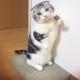 AMG GAMES、可愛い猫たちをくっつけて遊ぶパズルゲーム『にゃんこね』が「まっぷーちん」とのコラボを実施