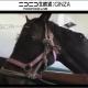 ドワンゴ、「リアルダービースタリオン」父馬を「ホッコータルマエ」に決定