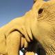 NIKONの360度VRアクションカメラ「KeyMission 360」のムービーが公開 インドの粉かけ祭りやケニアの野生動物の様子などを仮想空間で体験