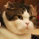 360Channel、アニマルカフェに行こう!において、猫カフェ動画「オモチャにつられて続々と…」を公開