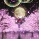 「KING OF PRISM -Shiny Seven Stars-」興収4億円突破と大ヒット! 桜吹雪に札束が舞うプリズムシャワー上映開催決定!