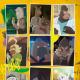 IMAGICA GROUPのP.I.C.S.とOLM、アニメ「オッドタクシー」を制作 コミカルなのに猛毒、ポップなのにミステリー、新ジャンルのオリジナル作品