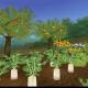 アソビモ、『トーラムオンライン』に新機能「栽培&料理」を追加 期間限定ボス「死霊使いウササマ」と戦えるワープポータルもオープン