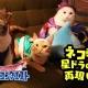 スクエニ、『星のドラゴンクエスト』が「猫の日」に合わせたWEBムービー「猫の日【星ドラ】ネコ勇者たちが冒険してみた」をYouTubeにて公開!