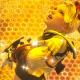 スクエニ、『FFBE』でオリジナルユニット「デイジー」(CV:青山吉能さん)をCGムービー付きで追加! 限定装備が手に入るストーリーイベントも開催!