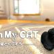 ネイロ、スマホ用ペット育成SLG『with My CAT – 猫とくらそう -』を4月5日より配信 声に音声認識で子猫が反応 AR撮影機能も