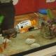【おもちゃ見本市2016】シーシーピー、水中撮影が楽しめる『サブマリナーカメラ』を出展…「慣れてくるとエサなしでも金魚が接近してくれる」