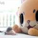 ACCESSPORT、『にゃんグリラ』にてCM動画第二弾「メルルとちぃたん☆冒険に行こうよ編」を公開!