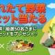 NHN PlayArt、『ハッピーベジフル』で九州野菜王国提供の「旬の採れたて熊本県産野菜7品目セット」のプレゼント企画を開始