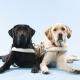 ガマニア、わんこ育成SLG『てのひらワンコ』で盲導犬の育成支援活動を実施