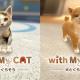 ネイロ、『with My DOG -  犬とくらそう -』と『with My CAT - 猫とくらそう -』のダウンロード総数が10万DLを達成
