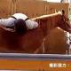 【連載】ゲーム業界 -活人研 KATSUNINKEN- 第六十回「按図索駿(あんずさくしゅん)」