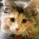 360Channel、アニマルカフェに行こう!において、猫カフェ動画「高いところからすいません」を公開