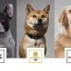 VOYAGE GROUP、ペットメディア事業を展開するrakanuを7月1日付で完全子会社化