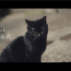 WFS、『アナザーエデン 時空を超える猫』がドラマCMの第4話~第7話を特設サイトで公開 時空を超えた兄と妹の物語の結末は如何に……