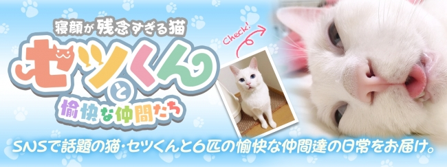 360Channelは、本日(2月22日)、360度VR動画専用配信サービス「360Channel」にて、寝顔が残念なイケメン猫「セツ くん」に超接近できるVR動画の配信を開始した。